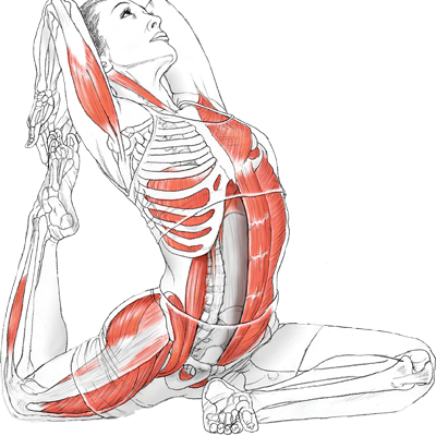 yogaanatomy-cover-transparent-large